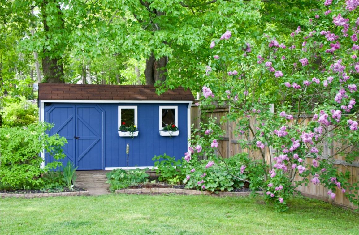 blue she shed bush in the backyard