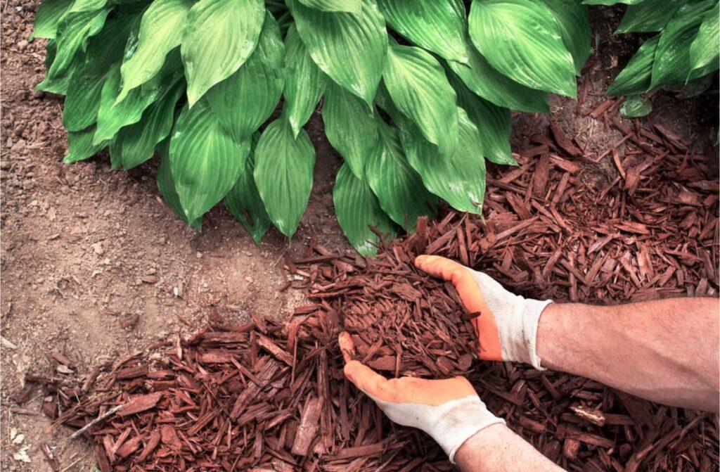 Close up man wearing gardening gloves